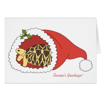 Burmese Star Tortoise Christmas Card (santa hat)