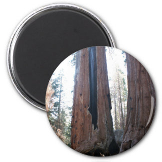 Burned Sequoia Magnet