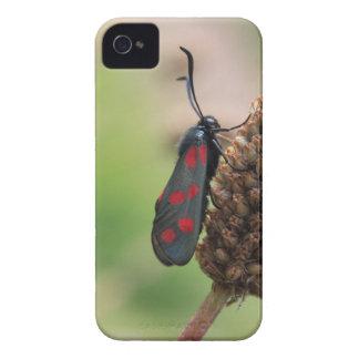 Burnet moth iPhone 4 Case-Mate case