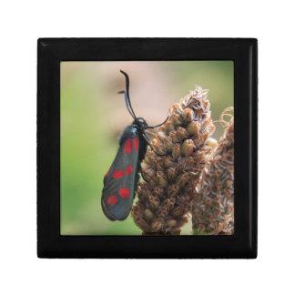 Burnet moth jewelry box