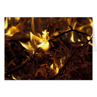 Burning Branches Stationery Note Card