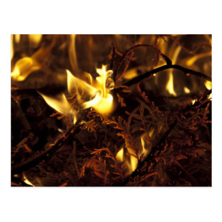 Burning Branches Postcard