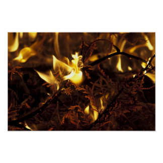 Burning Branches Poster