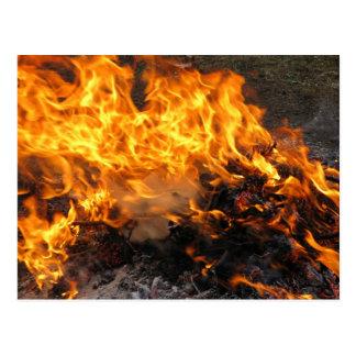 Burning Brush Postcard