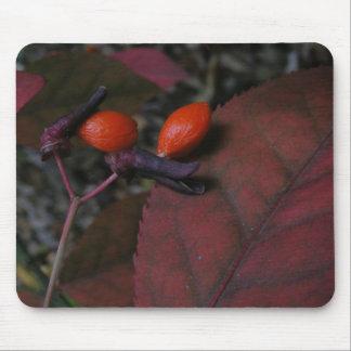 Burning Bush seed mousepad