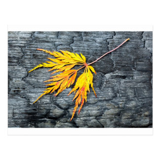 Burnt black wood with yellow leaf postcard