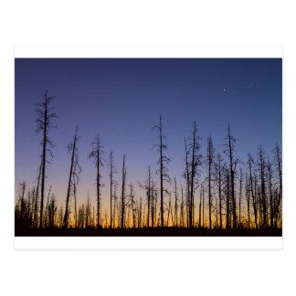 Burnt-Forest Postcard