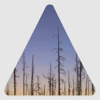 Burnt-Forest Triangle Sticker