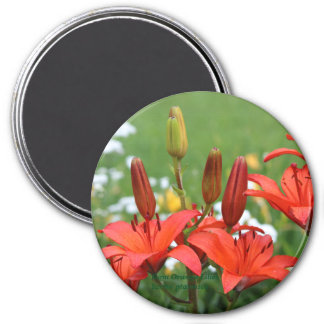 Burnt Orange Asiatic Lilies Early Summer Gardens Magnet