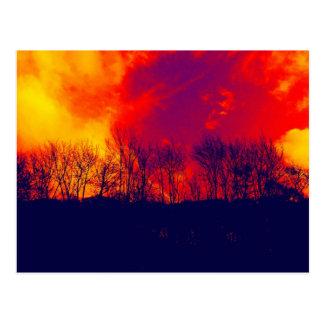 Burnt Savannah Stunning Trees Silhouette Postcards