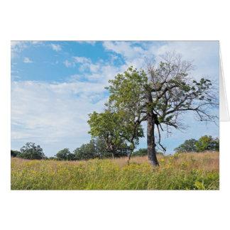 Burr Oak Trees and Prairie Card