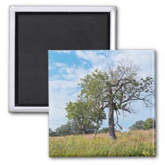 Burr Oak Trees and Prairie Magnet