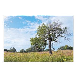 Burr Oak Trees and Prairie Photo Print