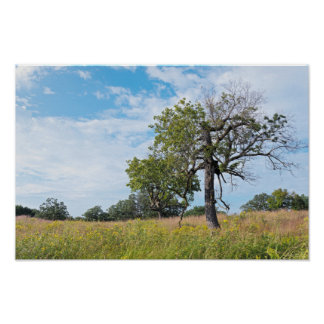 Burr Oak Trees and Prairie Poster
