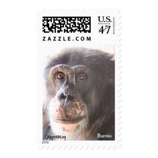 Burrito Chimpanzee Stamps
