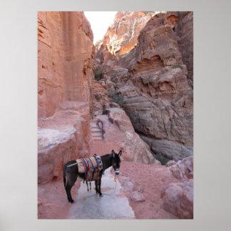 Burro en el Petra Póster