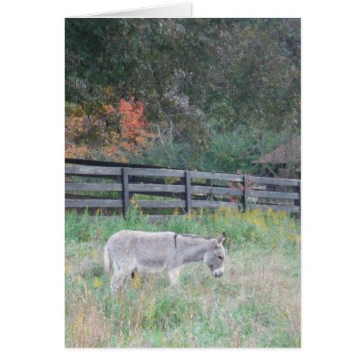 Burro en un campo del otoño de la caída tarjeta de felicitación
