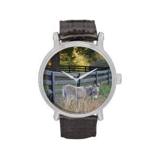 Burro en un campo del otoño relojes de pulsera