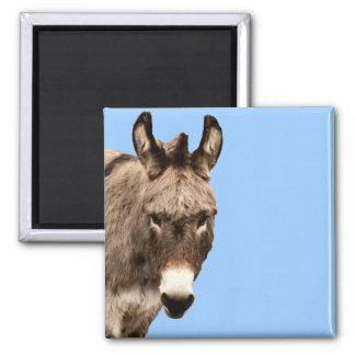 burro imán de frigorífico