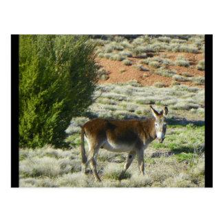 burro postcard