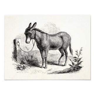 Burros retros personalizados burro nacional del vi