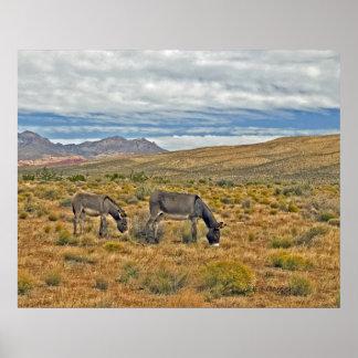 Burros salvajes del barranco rojo de la roca posters