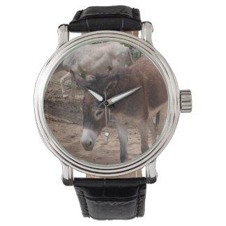 Burros salvajes relojes