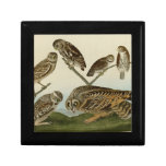 Burrowing, Night, Columbian, and Short-Eared Owls Trinket Boxes