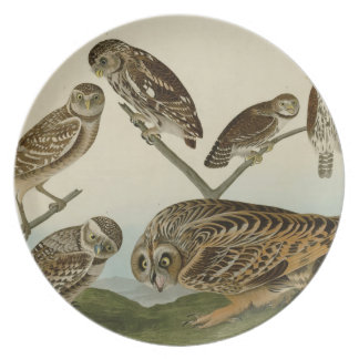 Burrowing, Night, Columbian, and Short-Eared Owls Melamine Plate