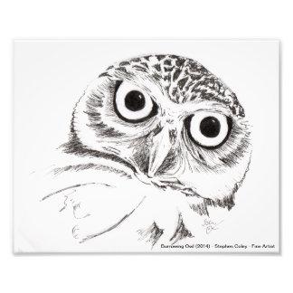 Burrowing Owl (2013) Photo Print