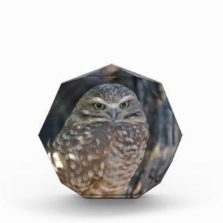 Burrowing Owl Acrylic Award