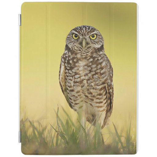 Burrowing Owl at Sunset iPad Smart Cover