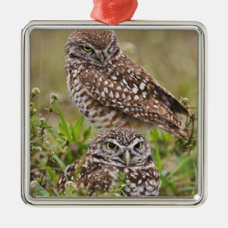 Burrowing Owl, Athene cunicularia, Cape Coral, Metal Ornament