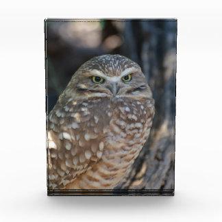 Burrowing Owl Award