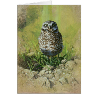 Burrowing Owl, Blank Greetin Card by Andrew Denman