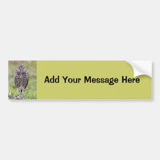 Burrowing Owl Car Bumper Sticker