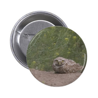 Burrowing Owl Pins