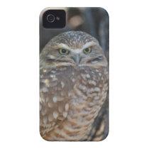 Burrowing Owl Case-Mate iPhone 4 Case