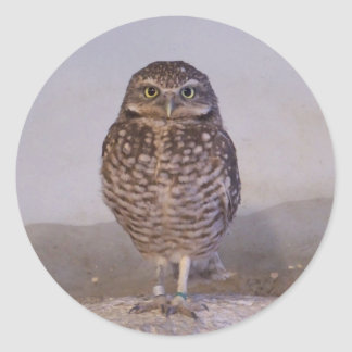 Burrowing Owl Classic Round Sticker