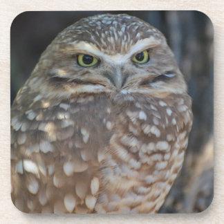 Burrowing Owl Coaster
