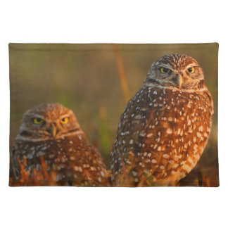 burrowing owl couple cloth placemat