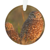 burrowing owl couple ornament