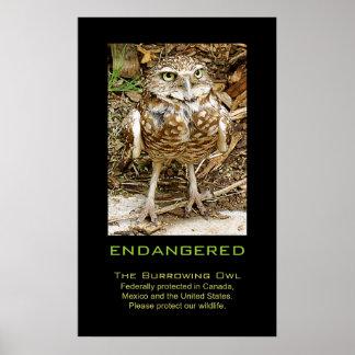 """Burrowing Owl """"Endangered"""" Poster"""