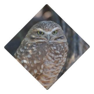 Burrowing Owl Graduation Cap Topper