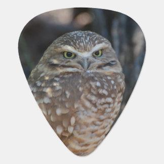 Burrowing Owl Guitar Pick