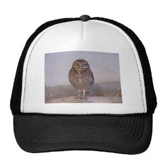 Burrowing Owl Hats