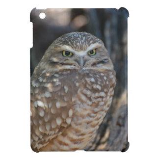 Burrowing Owl iPad Mini Cases