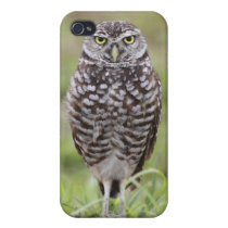 Burrowing Owl iPhone 4/4S Case