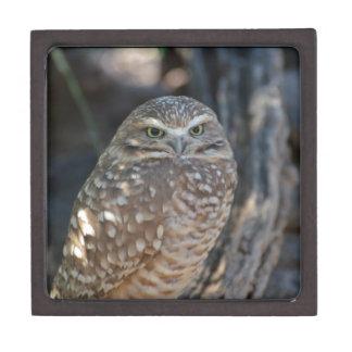 Burrowing Owl Jewelry Box