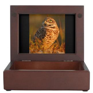 burrowing owl keepsake box